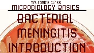 Download Introduction To Bacterial Meningitis : Microbiology Lectures Video