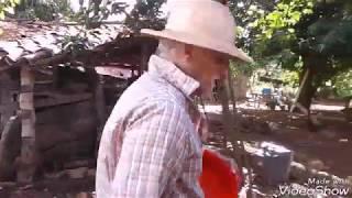Download COLHEITA DE OVOS CAIPIRA Video