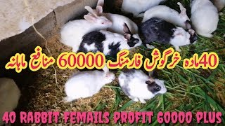 Rabbit Farming in Pakistan||How to start rabbit farming in