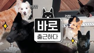 Download [바로 출근하다] 출근하는 강아지 바로의 '보듬 출근 브이로그' Video