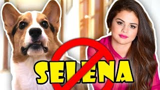 Download CORGI Disapproves of SELENA GOMEZ || Life After College: Ep. 575 Video