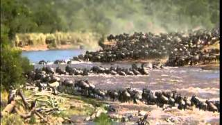 Download The Great Migration of the Animal's in Serengeti 480P Video