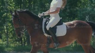 Download Female rider in the saddle. The horse goes passage. Horse galloping Video