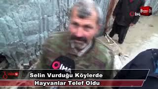 Download Selin Vurduğu Köylerde Hayvanlar Telef Oldu 16 Ocak 2019 8gunhaber 1 Video