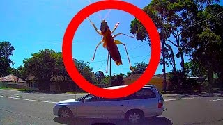 Download Giant SCARY Bug Attacks Car Big Spider Caught On Dashcam Video Video