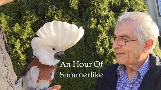 Download An Hour Of Summerlike Video