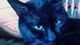 Download 【もも天劇場】うちの猫の裏稼業 Spy cat Video