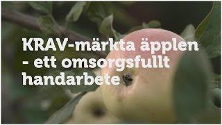 Download KRAV-märkta äpplen – ett omsorgsfullt handarbete Video