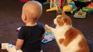 Download These Encounters Between Babies And Cats Are Guaranteed To Melt Your Heart Video