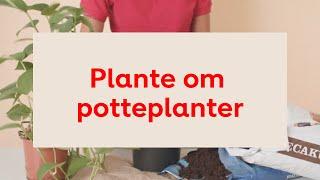 Download Plante om Video