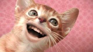 Download Singing Cats Video