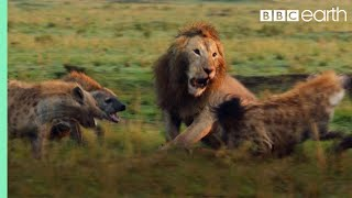 Download Lion Attacked by Clan of Hyenas - FULL CLIP (with ending) | Dynasties | BBC Earth Video