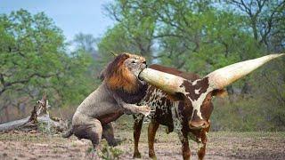 Download Самые Прожорливые Животные в Мире Video