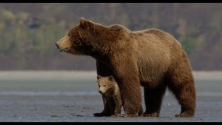 Download Disneynature's Bears - Official Trailer Video