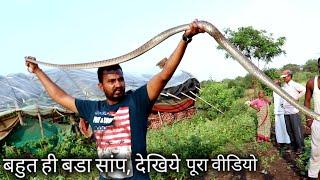 Download देखिये कहा छुपा था ये साप, और किस तरह इसको बाहर निकाला, Rescue big indian rat snake Video