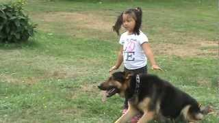 Download GERMAN SHEPHERD PROTECTING 4 YEAR OLD LITTLE GIRL FROM BAD GUY Video