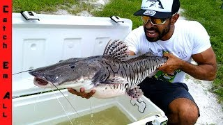 Download RARE GIANT TIGER FISH CAUGHT in CITY! Video