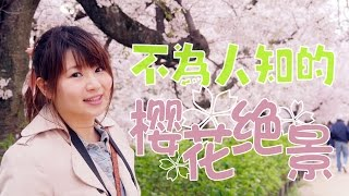 Download 惊奇日本:不為人知的日本櫻花絕景【お花見-夙川の桜・絶景】ビックリ日本 Video