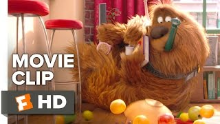 Download The Secret Life of Pets Movie CLIP - Trashing the Apartment (2016) - Louis C.K. Movie HD Video