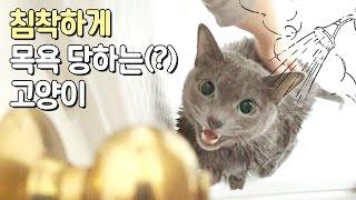 Download 침착하게 목욕 당하는(?) 고양이 Video