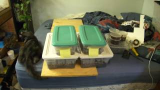 Download Isopods and springtails! Vivarium Clean Up Crew! Video