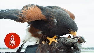 Download The Ancient Art of Keeping Birds at Bay Video