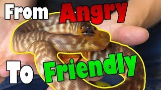Download How to Tame an ″Aggressive″ Snake Video