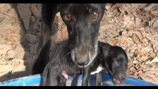 Download Instinto materno, Vamos pra casa garoto, Neguinha, Filhotes de cachorro, Cão vira lata, Video
