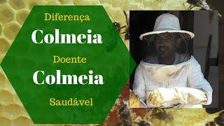 Download Diferença entre Colmeia doente & colmeia saudável Video