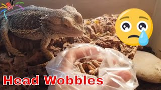 Download Rescued Reptiles Enclosure Updates + Beardie care Video