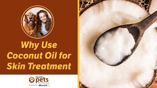 Download Dr. Becker: Why Use Coconut Oil for Skin Treatment Video