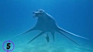 Download 5 Creepy Deep Sea Creatures Video
