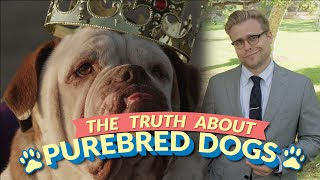Download The Bizarre Truth About Purebred Dogs (and Why Mutts Are Better) - Adam Ruins Everything Video