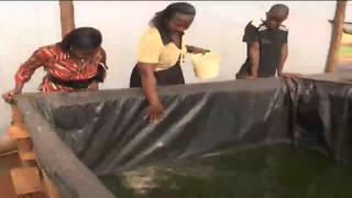 Download Kenya's highlands farmers embracing fish farming as an alternative source of income Video