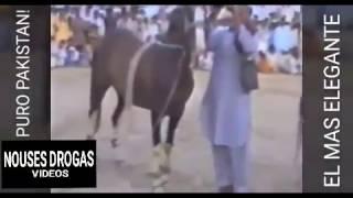 Download IMPRESIONANTE CABALLO BAILADOR, SEGURO DE PAKISTÁN!! Video