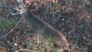 Download Straight Down 8 (Traditional Bowhunt) Video