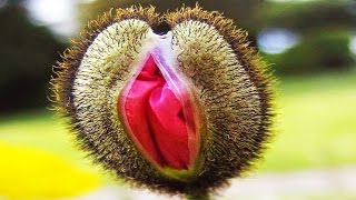 Download Top 10 Strangest Plants On Earth Video