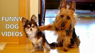 Download *Try Not To Laugh Challenge* Funny Dogs Compilation - Funniest Dog Videos 2017 Video