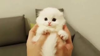 Download Funny Baby Animals Doing Funny Things Video