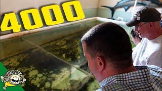 Download HAND FEEDING 4000 GALLON MONSTER TROPICAL CATFISH TANK Video
