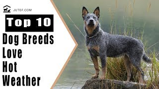 Download Top 10 Dog Breeds That Love Hot Weather Video