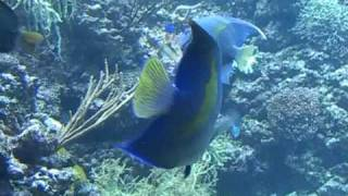 Download Riffaqaurium reef tank 6076 gallons Video