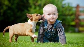 Download Puppies and Babies Playing Together Compilation Part 3 Video