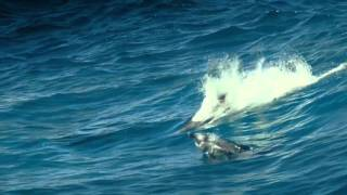 Download Oxygene - The Ocean Video