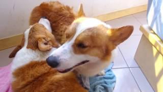 Download [連環泡][洗澡直播]林媽媽的藥膳基湯#狗年年菜 Video