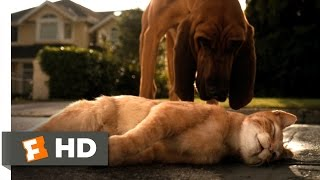 Download Cats & Dogs (1/10) Movie CLIP - Catnapped (2001) HD Video