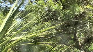 Download Alligator Swamp and Spoonbills Cam 08-26-2018 10:27:34 - 11:27:35 Video