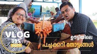 Download ഊട്ടിയിലെ കാരറ്റ് തോട്ടങ്ങൾ - Exploring Vegetable Farms in Ooty, Vlog 395 Video
