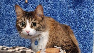 Download Мурмемуары. История кота Мурлока Video