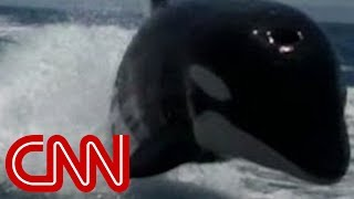 Download Killer whales surprise couple on boat Video